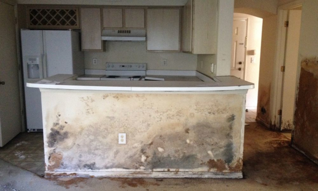 Mold Removal Valrico Florida Able Builders Inc