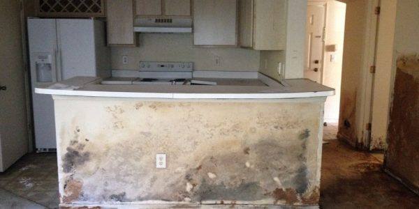 Mold Remediation in Clearwater home