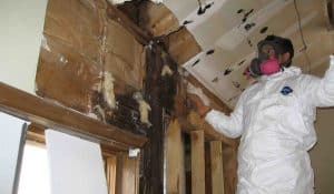 Mold Removal Clearwater FL Able Restoration & Able Builders, Inc