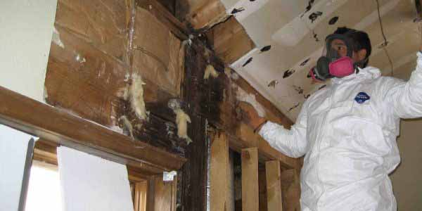 Mold Removal Safety Harbor Florida Able Builders Inc
