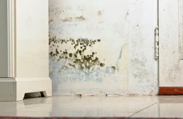 What is Black Mold Removal St Petersburg Florida