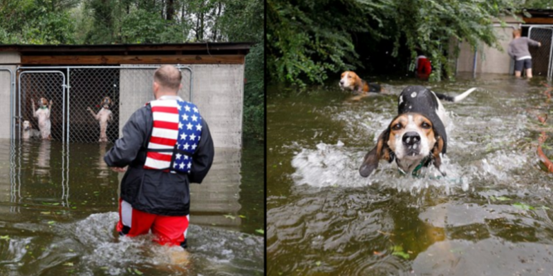 Hurricane Florence volunteer saves six dogs