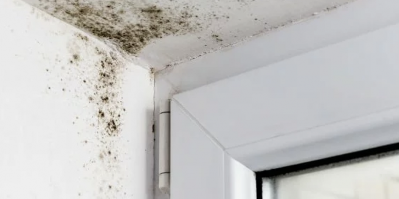 Call Able Builders Inc For Mold Testing And Removal Services
