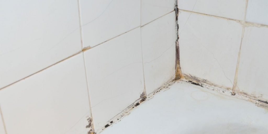 Bathroom Mold Removal Clearwater Florida